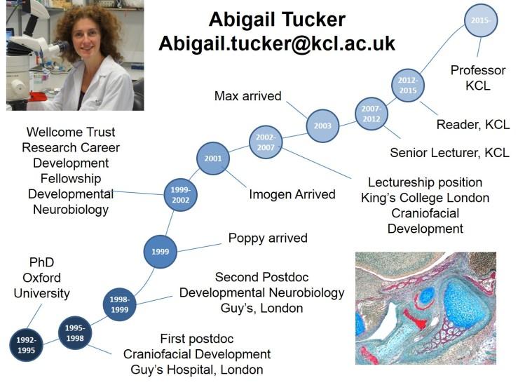 Careers_timeline_AbigailTucker