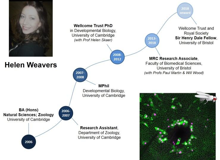 Careers_timeline_HelenWeavers